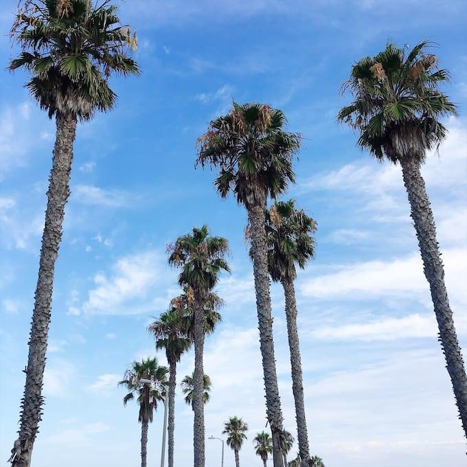 Venice CA